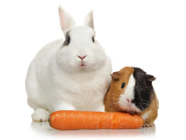 Fütterung von Kaninchen und Meerschweinchen