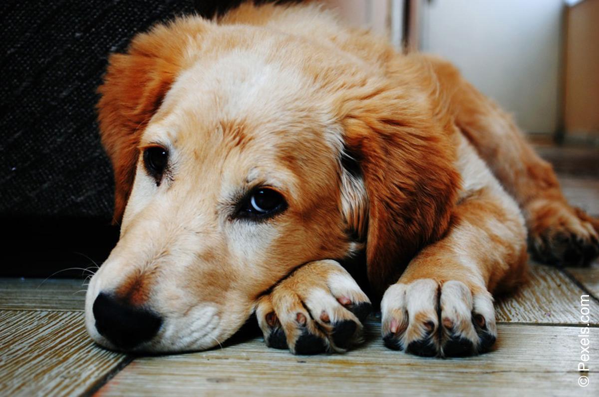 Durchfall Wann Der Tierarztbesuch Nötig Ist Tierarzt Dr Medvet