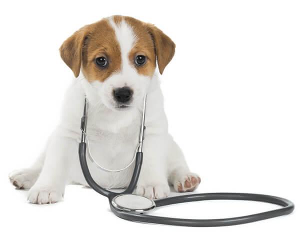 Erster Tierarztbesuch München
