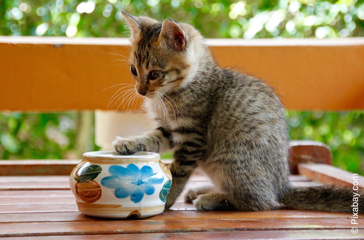 Früh reagieren, wenn die Katze nicht frisst - Tierarzt Dr