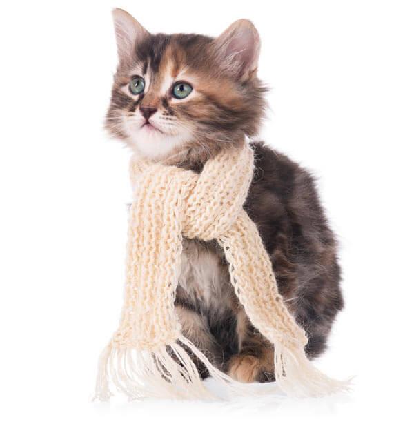 Kitten Tierarzt Hadern
