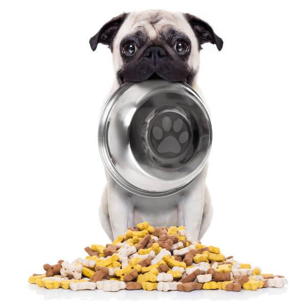 Tierarzt München Futterempfehlung