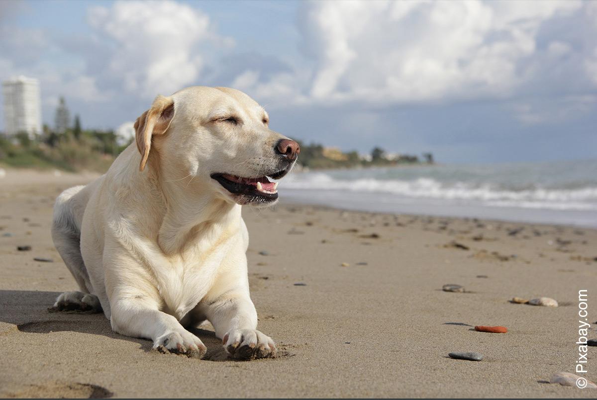 Gewichtsverlust bei einem Hund